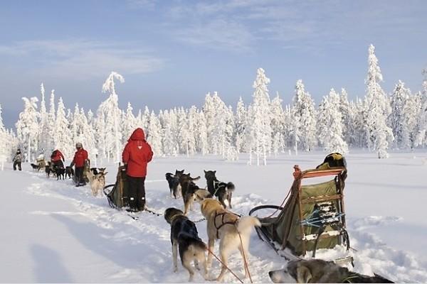 Chiens de traineau Club Jet Tours Yllas Saaga4* Kittila Finlande