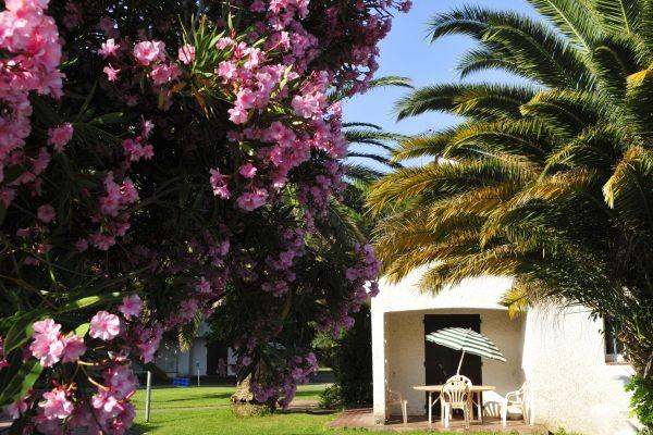 Façade du gîte - Domaine du Mas Blanc Village Vacances Domaine du Mas Blanc Alenya France Languedoc-Roussillon