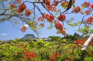 Ile Maurice-Wolmar, Hôtel Sea Villa Mauritius 3*